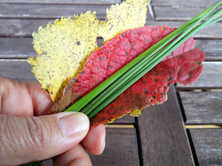 Human Hand Hand Wood - Material Close-up Finger Autumn Fall Autumn Leaves Autumn Colours Simplicity Shapes And Forms