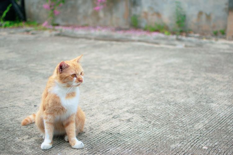 Ginger cat. Worldcatday Worldcatsday Welovecats Kitten Young Animal Tabby Cat Cat Tabby Whisker Paw Animal Eye