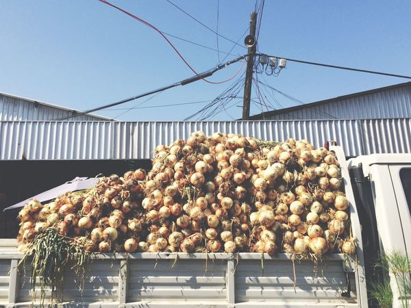 At The Market Onions For Days Open Edit
