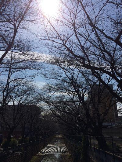 春には桜が満開に。とても待ち遠しいです。