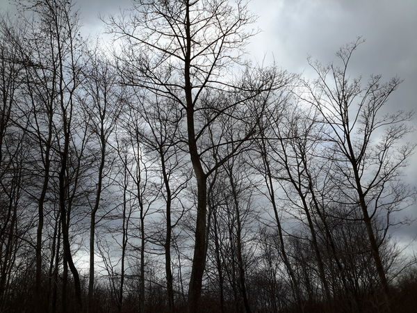 Tree Nature Sky Low Angle View Beauty In Nature No People Growth Cloud - Sky Outdoors Tranquility Scenics Branch Day Silhouette Bare Tree Early Spring Forest Forest Trees Silhuet Silhuetter Træ Træer Danmark - in The Danish Countryside
