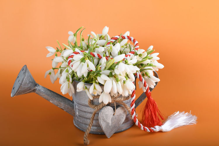 Close-up of flowering plant against orange background