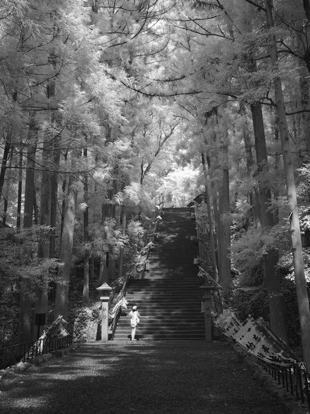 Beauty In Nature Day Indoors  Infrared Photography Ir Photography Nature No People Stairways The Way Forward Tree