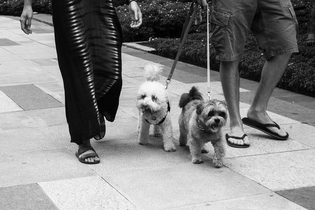 On all fours. Dog Pets Black And White Eyeem Philippines Street Photography NikonD3100 Streetphotography