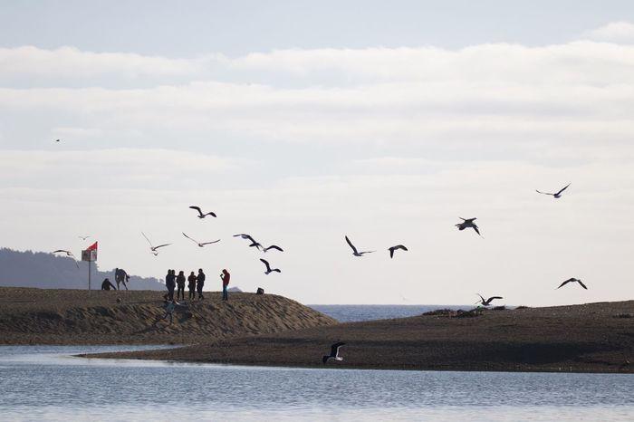 EyeEm Selects Bird Flying Animal Animal Themes Vertebrate Animal Wildlife Animals In The Wild Nature Beauty In Nature Scenics - Nature Day Sea Seagull