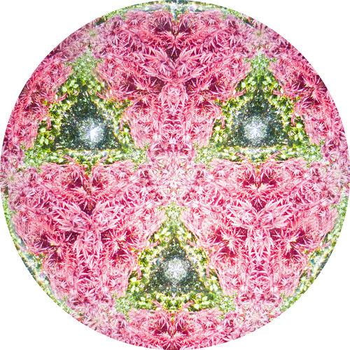 The colours just keep coming at you. Close-up Pink Color No People Shape Design White Background Circle Studio Shot Green Color Biology Still Life Geometric Shape Red Creativity Pattern Digital Composite Nature Detail Abstract Kaleidoscope Kaleidoscope Image Kaleidoscope Images Kaleidoscope Imagery FaceTime Multifaceted Multifaceted Prism Experiment