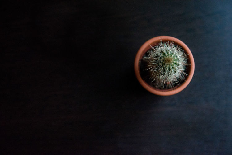 Directly Above Shot Of Potted Cactus On Wooden Table