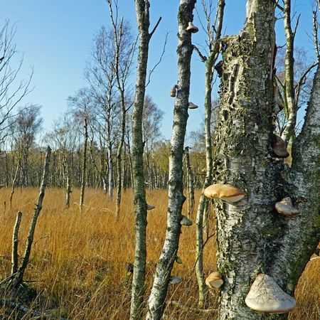 Into the wild - Dosenmoor bei Neumünster Naturschutzgebiet Nofilter Moor  Natur Baum Pilz