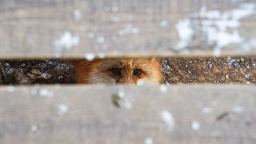 Portrait of dog seen through fence