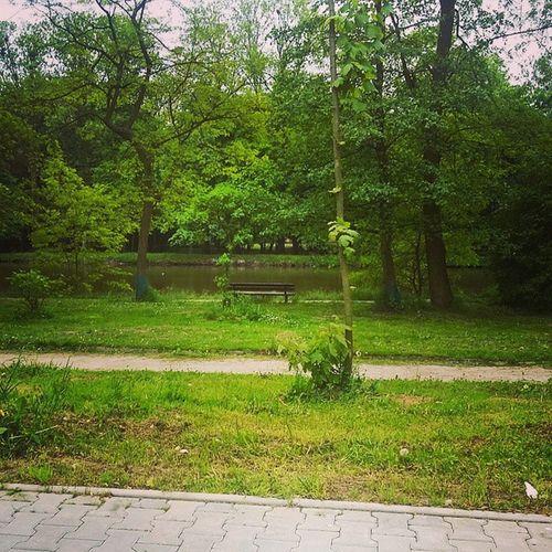 Piotrków Dworska Poland Polska przerwa nature pause lonlyness brake staw drzewa