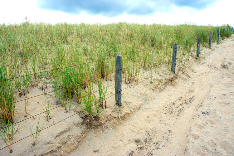 Beach Fance Grass Green Color Landscape Nature Outdoors Sky Tranquil Location