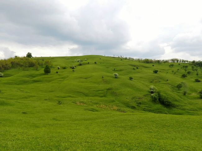 Green Grass Green Hills Trees And Sky Trees Tree Check This Out Eyeem Photography Eyeem Collection EyeEm Nature Lover EyeEm Eyeemphotography Eye4photography  EyeEm Gallery Sky_collection Hello World The Great Outdoors - 2016 EyeEm Awards
