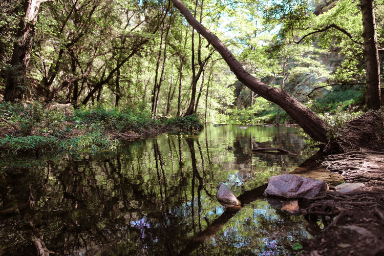 Beauty In Nature Branch Day Forest Growth Lake Landscape Low Angle View Nature No People Outdoors Plant Reflection Scenics Tranquil Scene Tranquility Tree Tree Trunk Water