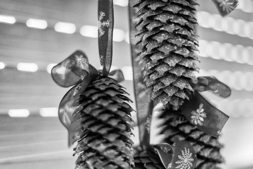 Black & White Christmas Holidays Home Black And White Friday Close-up Day Decoration Fir-cone Focus On Foreground Handmade Hanging Indoors  Monochrome No People Pine-cone Stars Windows