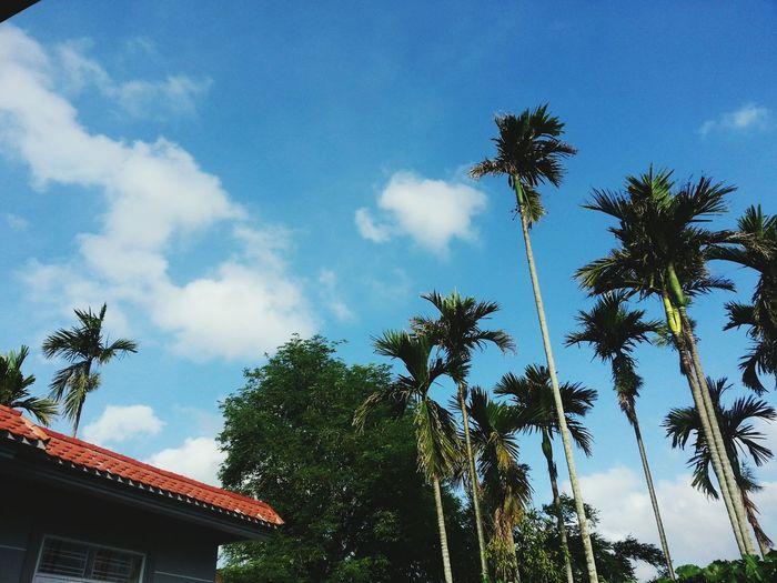 Hotsummerday Blue Sky Green Redhouse Relaxingtime Ilikethesummer🌊☀🌴