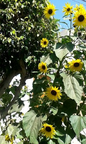 Myfavoriteflower Flowers Flower Collection