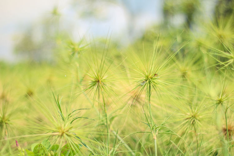 Plant Flower Freshness Nature Flowering Plant Growth Beauty In Nature Close-up Fragility Field Green Color Land Vulnerability  Uncultivated No People Dandelion Day Grass Outdoors Focus On Foreground Flower Head Dandelion Seed Softness