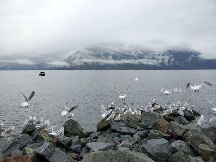 Seagulls at porteu provincial park