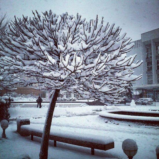 Snowy Beauty in Vinnitsa Vnua igukraine winter