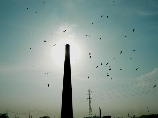 Birds Brick Field Environmental Pollution Sky