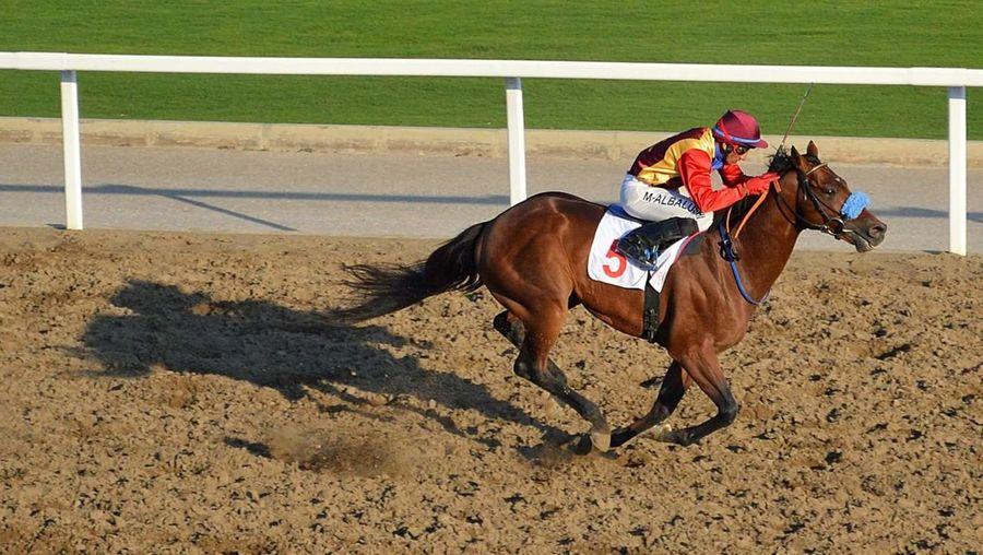 Horse Riding Sport Jockey Eyem Sports