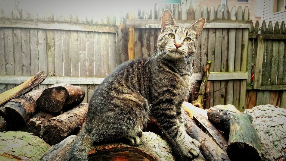 My cat River Wood - Material Animal Themes No People Day Outdoors Mammal Nature Domestic Animals Cat Cat Lovers Cat Photography Woodpile Pet Photography  Pets Pets Corner Tiger Cat Meow Cat Outdoors Cat On The Tree Animal Photography Animal_collection Kitty Cat Kitty
