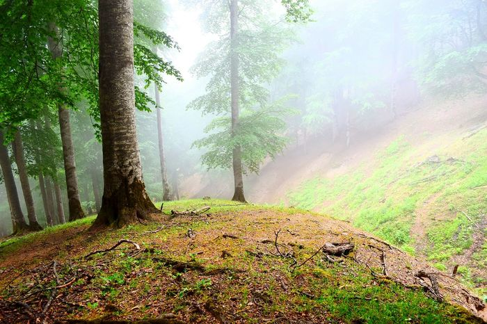 Green Leaves Tree Art Misty Morning Feeling Alive Jungle Wildlife & Nature Nature Photography Jungle & Mountain Trees Beauty Redefined Amazing Nature