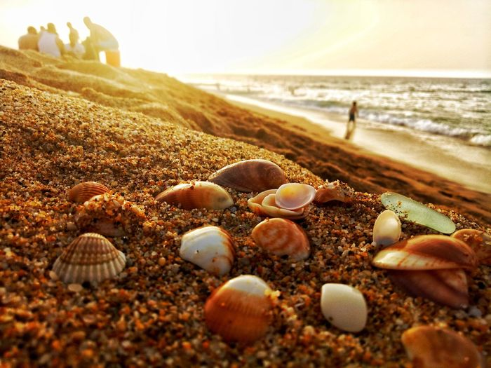 Animal Themes Sky Close-up Pebble Beach Water Beauty In Nature No People Outdoors Nature Vacations Seashell Day Sand Beach Sea Pebble Shore Sea_collection Sea Life Sea View Sea And Sky EyeEm Best Shots - Nature EyeEmNewHere EyeEm Gallery EyeEm Nature Lover EyeEm Selects