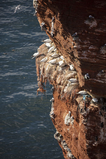 Close-up of rock formation on helgoland