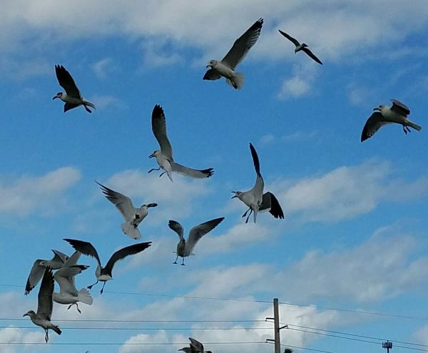 Flying Bird Animals In The Wild Animal Wildlife Low Angle View Motion Mid-air Animal Themes Animal Body Part Spread Wings Large Group Of Animals Outdoors Flock Of Birds Day No People Cloud - Sky Nature Animal Behavior Beauty In Nature Togetherness