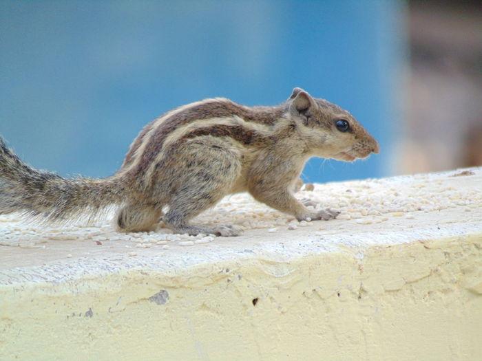 squirrel EyeEm Selects Beach Sand Close-up