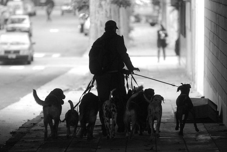 Dogs Walk