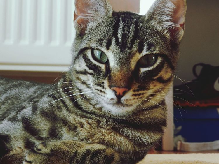 Cat Eyes Cat Watching Catlover Catoftheday Cats Catsofinstagram Cat Lovers Cats Of EyeEm Catportrait Caturday