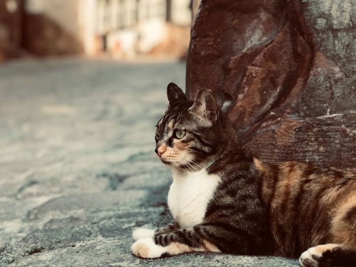 Catlike Animal Themes One Animal Animal Mammal Feline Vertebrate Pets Focus On Foreground Animals In The Wild Close-up Looking Looking Away Nature No People Relaxation Domestic Animal Wildlife Day Domestic Animals First Eyeem Photo