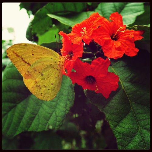 Eye Em Nature Lover Orange Flower Butterfly EyeEm Flower