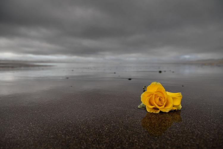 Yellow Flowers On Beach