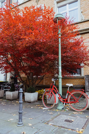 Bicycle parked on street by tree during autumn