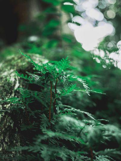 พืชเล็ก Close-up Green Color No People Water Nature Plant Day Growth Animal Wildlife Animals In The Wild Beauty In Nature Backgrounds Drop Animal Focus On Foreground Animal Themes Outdoors Full Frame Plant Part