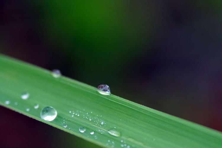 Close up of dew drops on grass blade