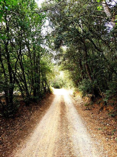 Nature Outdoors No People Beauty In Nature Day Green Color Tree Piensaenverde Catalunyaexperience Catalunya Rural Scene Empordapower Road Camins Caminos Roads
