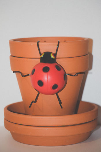Clay Clay Pots Lady Bug Plant Life Plant Lover Planter Pot Planters Plants White Background