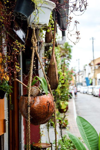 My perspective : Jonker Street, Melaka, Malaysia. Green Plants And Flowers Earth Eco Rural Scene Tree Hanging Leaf Close-up Cocoon Wasp Butterfly - Insect Symbiotic Relationship Animal Antenna Lantana Camara Commercial Fishing Net Growing Pollination Blooming Plant Life Pollen Petal Greenhouse
