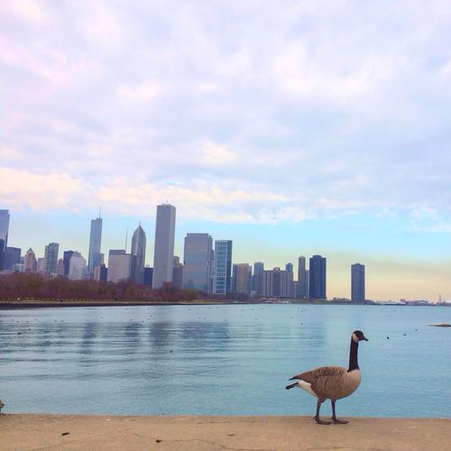 Chicago in November // Viewmatic