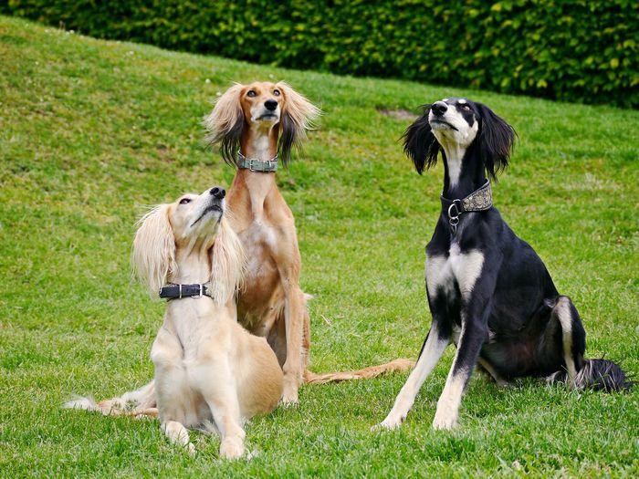 Dogs sitting on grassy field