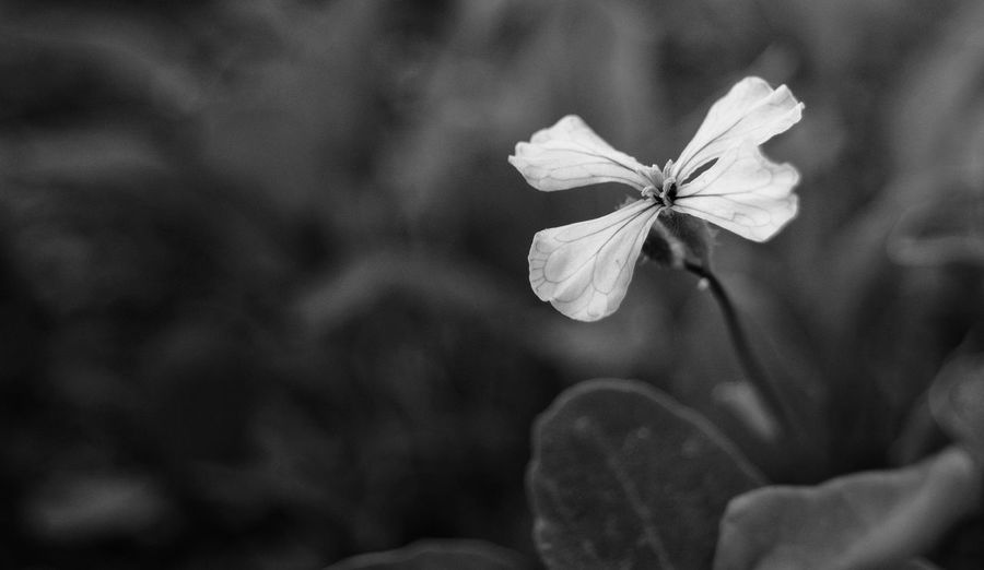 Nature Close-up Beauty In Nature Day No People Leaf Outdoors Hiding From The World Blackandwhite Standing One Grass Beautiful Flower Head Flower