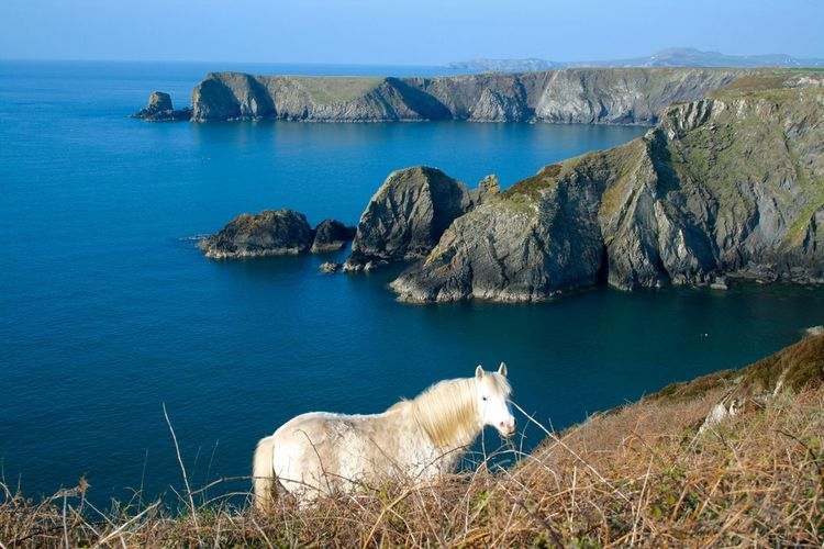 White Horse on Pembrokeshire Coastal Path EyeEmNewHere Summertime Walk White Horse Animal Themes Beauty In Nature Coastal Day Domestic Animals Grass Mammal Mountain Nature No People One Animal Outdoors Pembrokeshire Pets Rock - Object Scenics Sea Sky Space Water