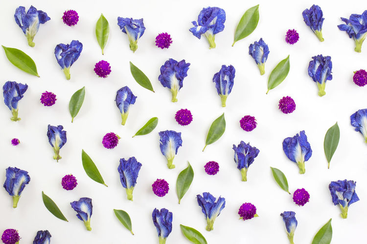 blue pea and