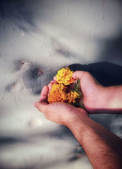 Close-up of hands holding yellow flowers