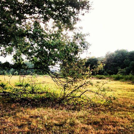 #wahnerheide #koeln #köln #cologne #radtour #biketour #natur #nature #igerscologne Biketour Wahnerheide Nature Natur Cologne Köln Koeln Igerscologne Radtour