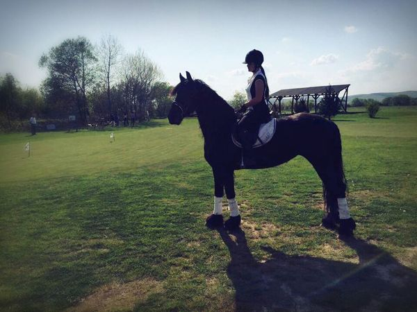 That's Me Equestrian Friesian Mare Love Golfplatz Taking Photos Check This Out